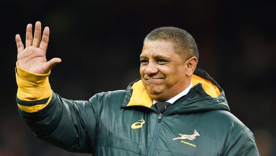 Des Springboks en reconstruction