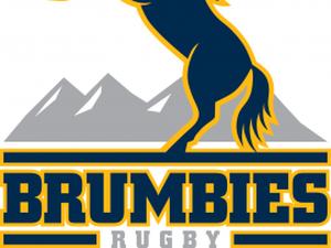 Super rugby: présentation des Brumbies