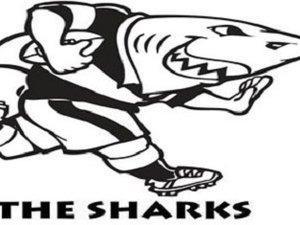 SUPER RUGBY : PRÉSENTATION DES SHARKS