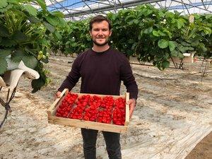 Laurent Thuéry pose avec les fraises qu'il fait pousser du côté de Clairac, dans le Lot-et-Garonne.